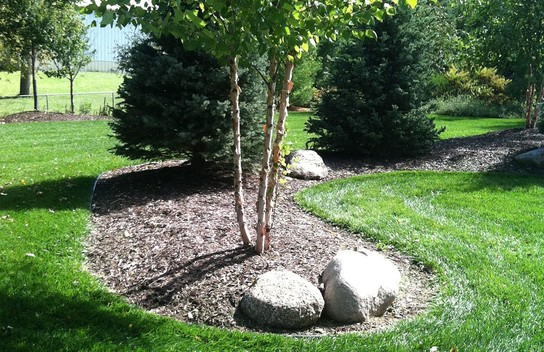 Backyard landscape showcasing large mulched berm