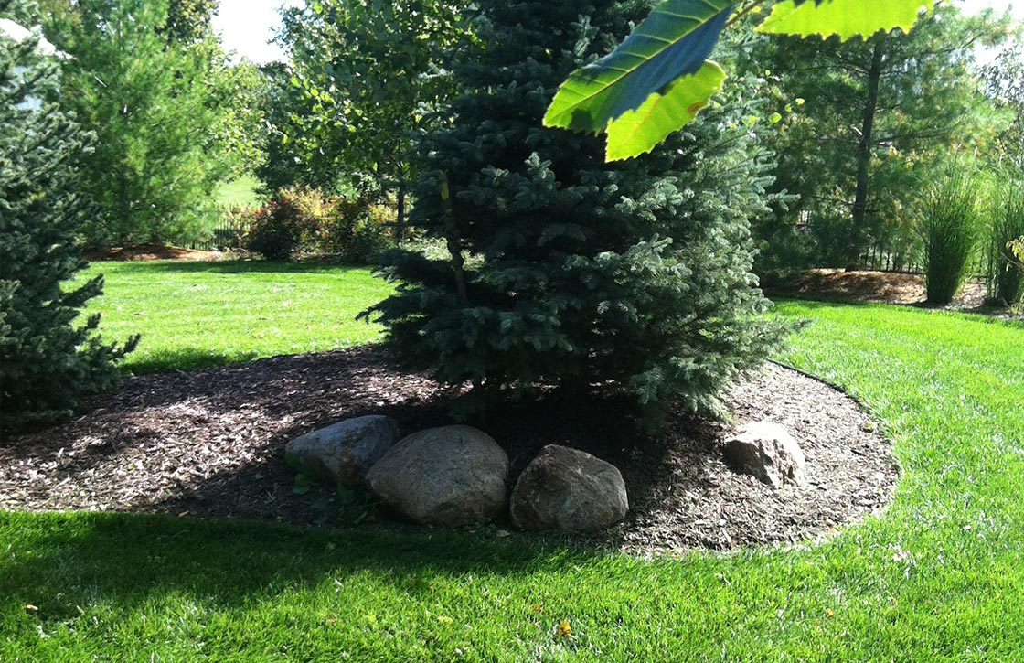 Backyard landscape showcasing maintenance of grass edging and berm